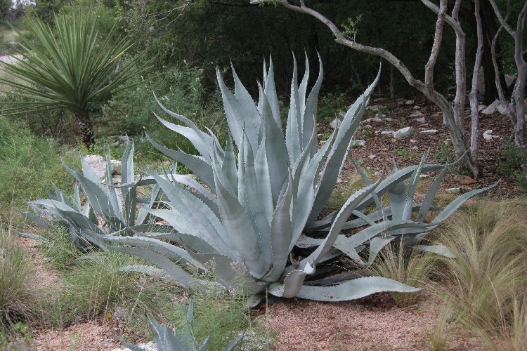 Water Efficient Plants Guide